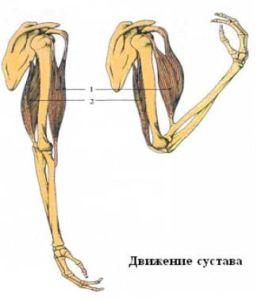 Двигательная фунцция рук