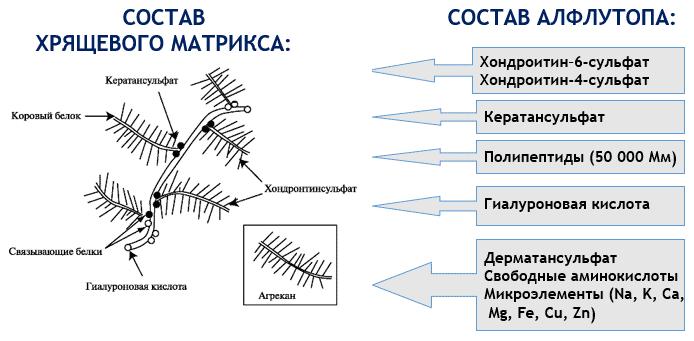 Алфлутоп состав препарата