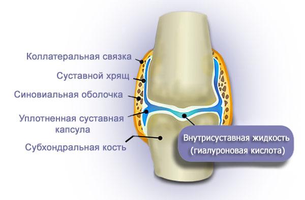 Действие гиалуроновой кислоты в суставе