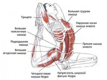 Йога и мышцы