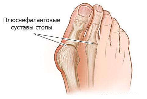 Строение суставов ступни человека коллаген ультра в таблетках для суставов