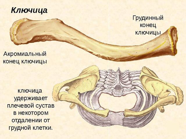 Изображение - Суставы первого пальца кисти kljuchica