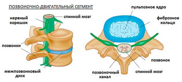 Строение межпозвонковых дисков