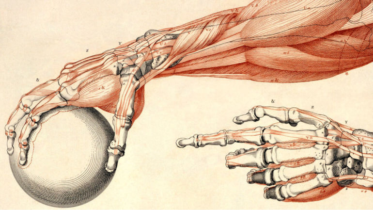 Лучезапястный сустав строение фото анатомия