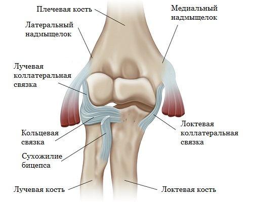 Сустав локтя выпирает артроскопии коленного сустава
