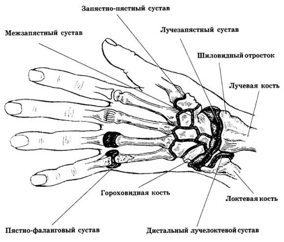 Изображение - Суставы первого пальца кисти sustavy