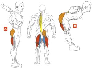 Упражнения для укрепления мышц спины у мужчин